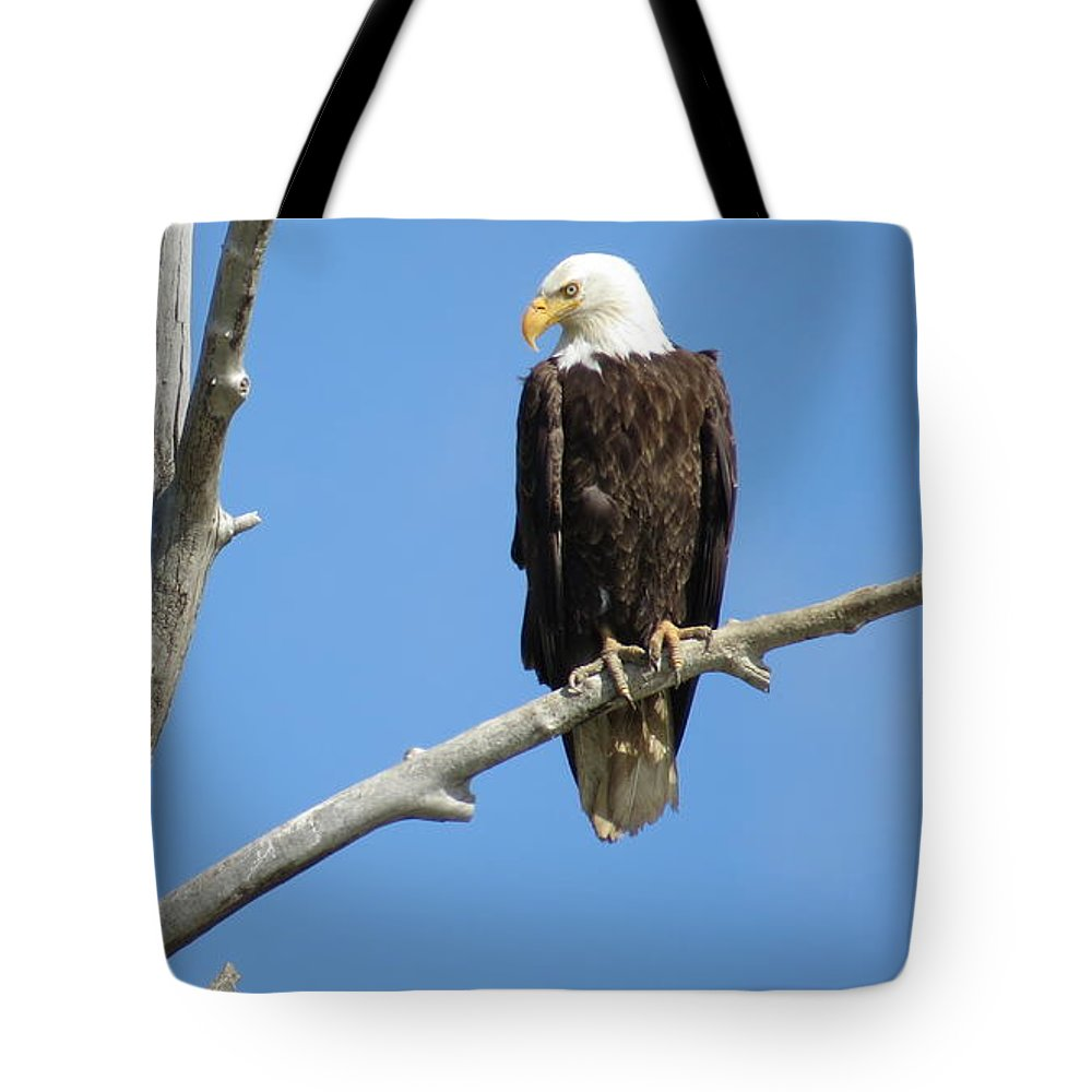 American Bald Eagle Tote Bag featuring the photograph Regal Eagle by Christi Chapman