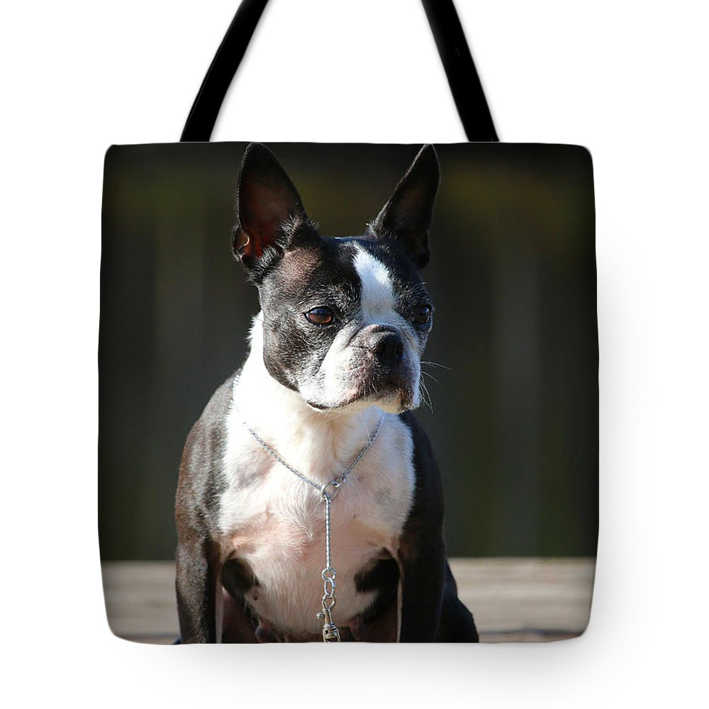 Animal Tote Bag featuring the photograph Regal by Susan Herber