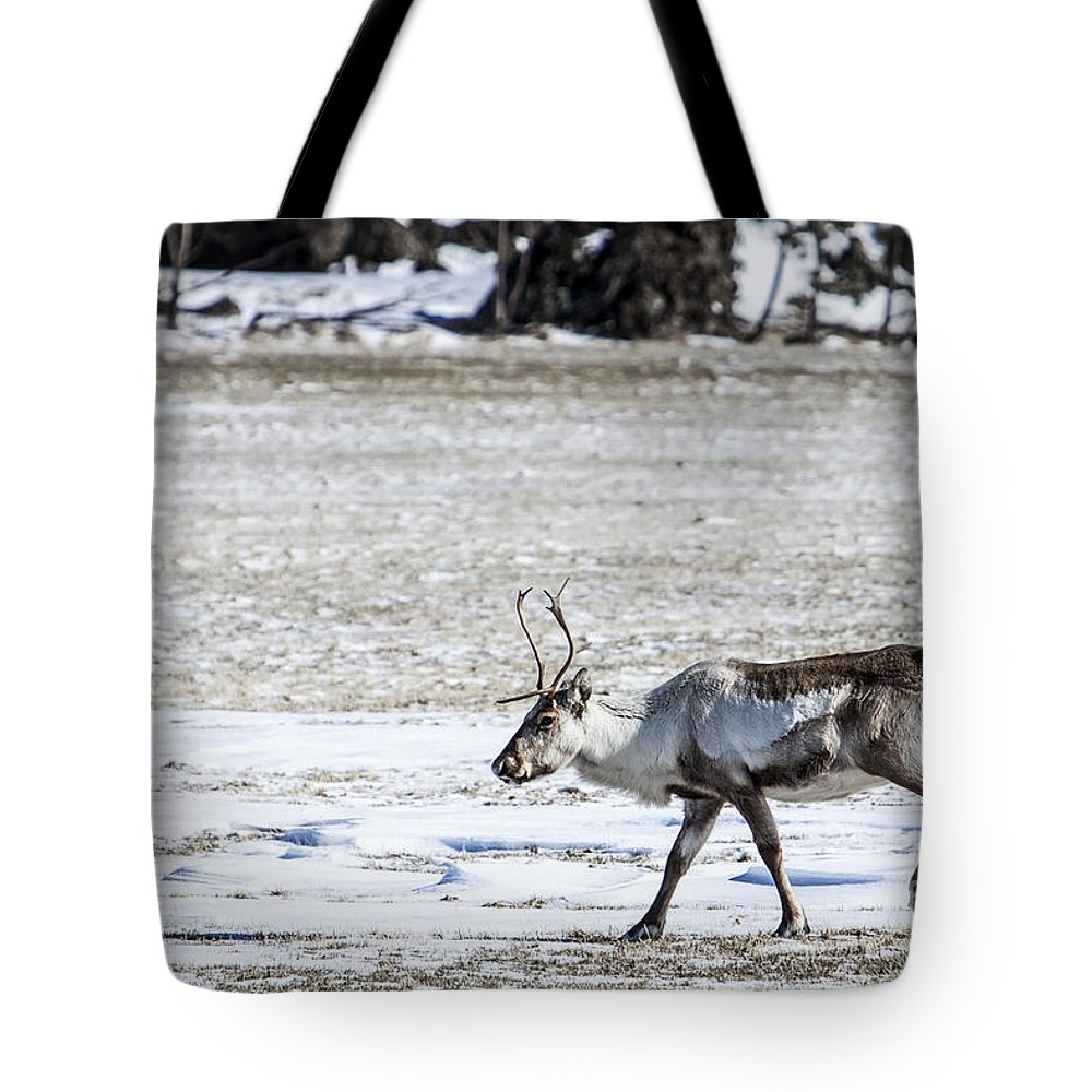 Reindeer Tote Bag featuring the photograph Reindeer by Gunnar Orn Arnason