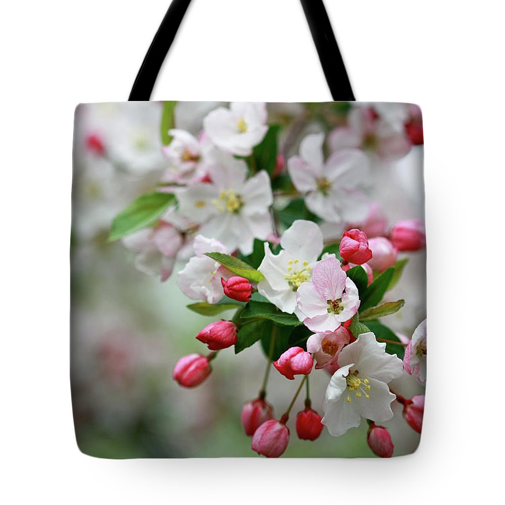 Crab Apple Blossoms Tote Bag featuring the photograph Renewal by Martina Schneeberg-Chrisien