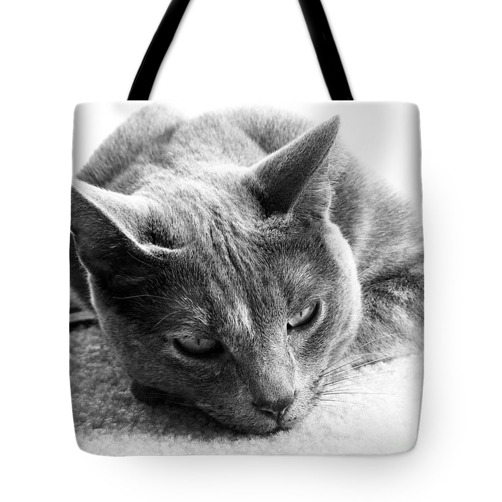 Cats Tote Bag featuring the photograph Resting by Amanda Barcon