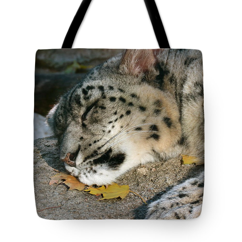 Animals Tote Bag featuring the photograph Resting by Azthet Photography