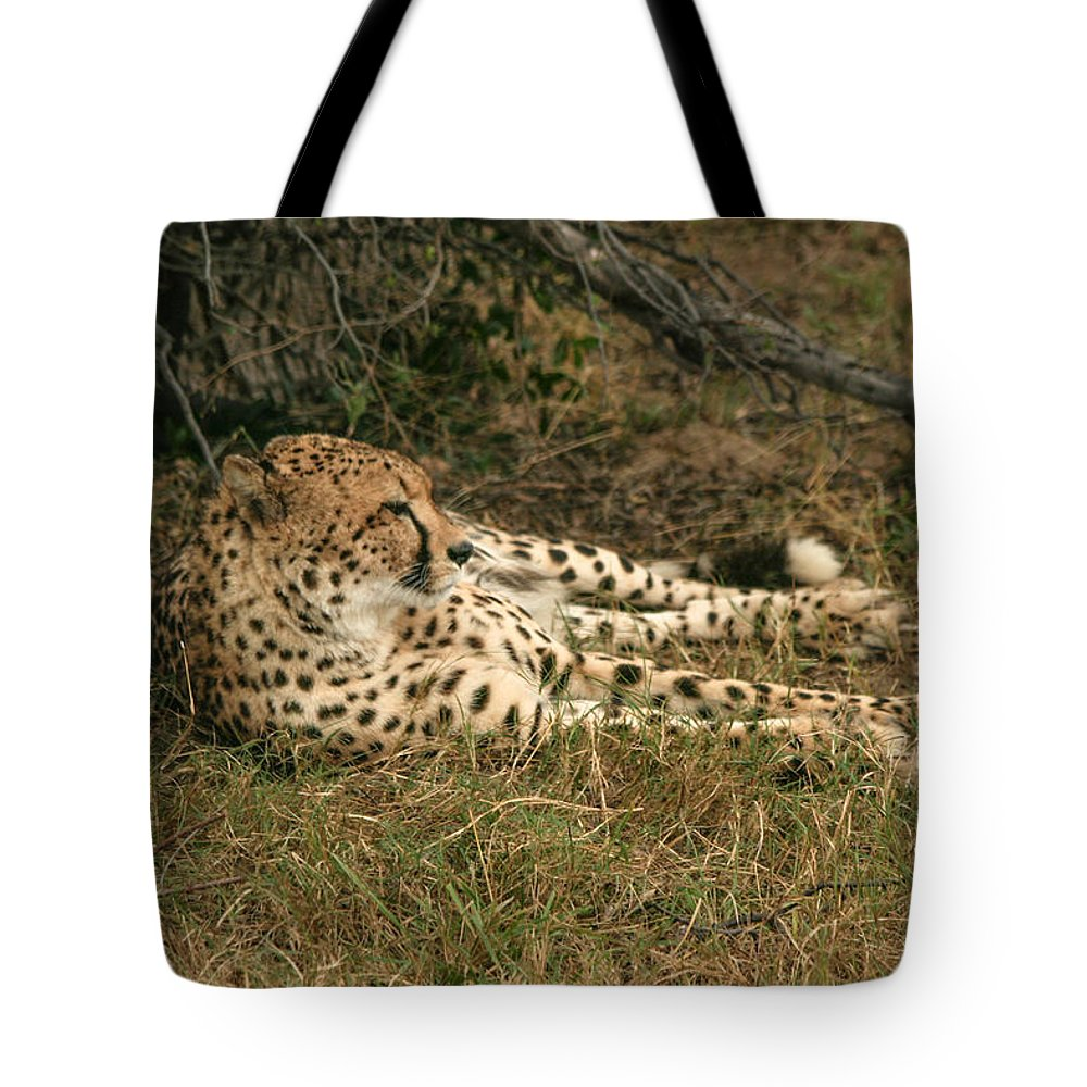 Karen Zuk Rosenblatt Art And Photography Tote Bag featuring the photograph Resting Cheetah by Karen Zuk Rosenblatt