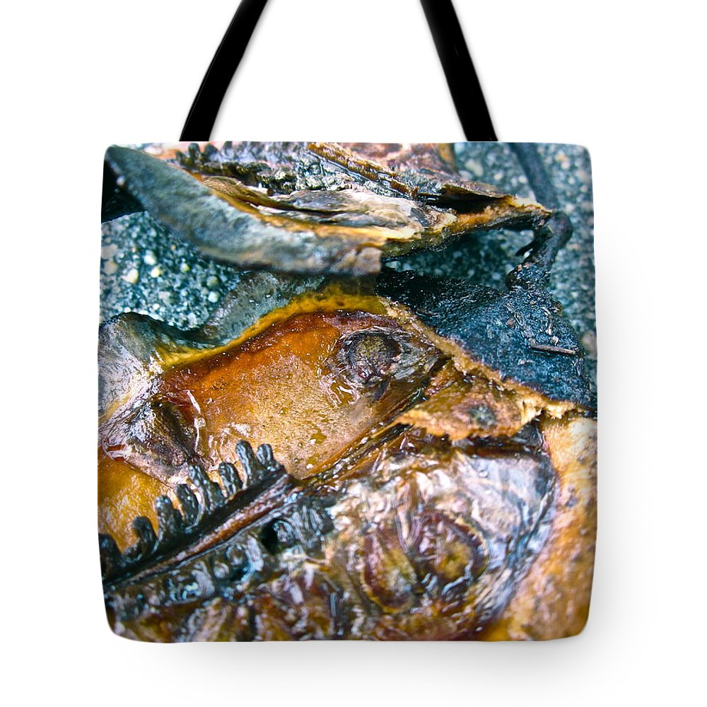 Tree Pod Tote Bag featuring the photograph Revealing Tree Pod by Gwyn Newcombe