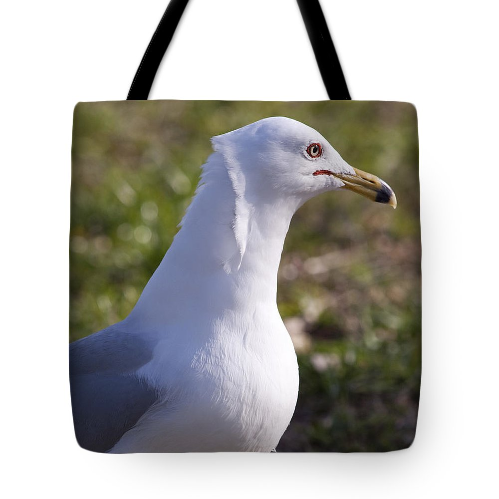 Larus Tote Bag featuring the photograph Ring-billed Gull by Allan Hughes