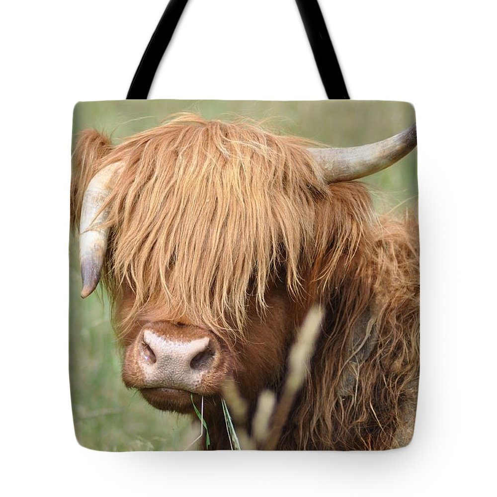 Cow Tote Bag featuring the photograph Ringo - Highland Cow by Bill Cannon