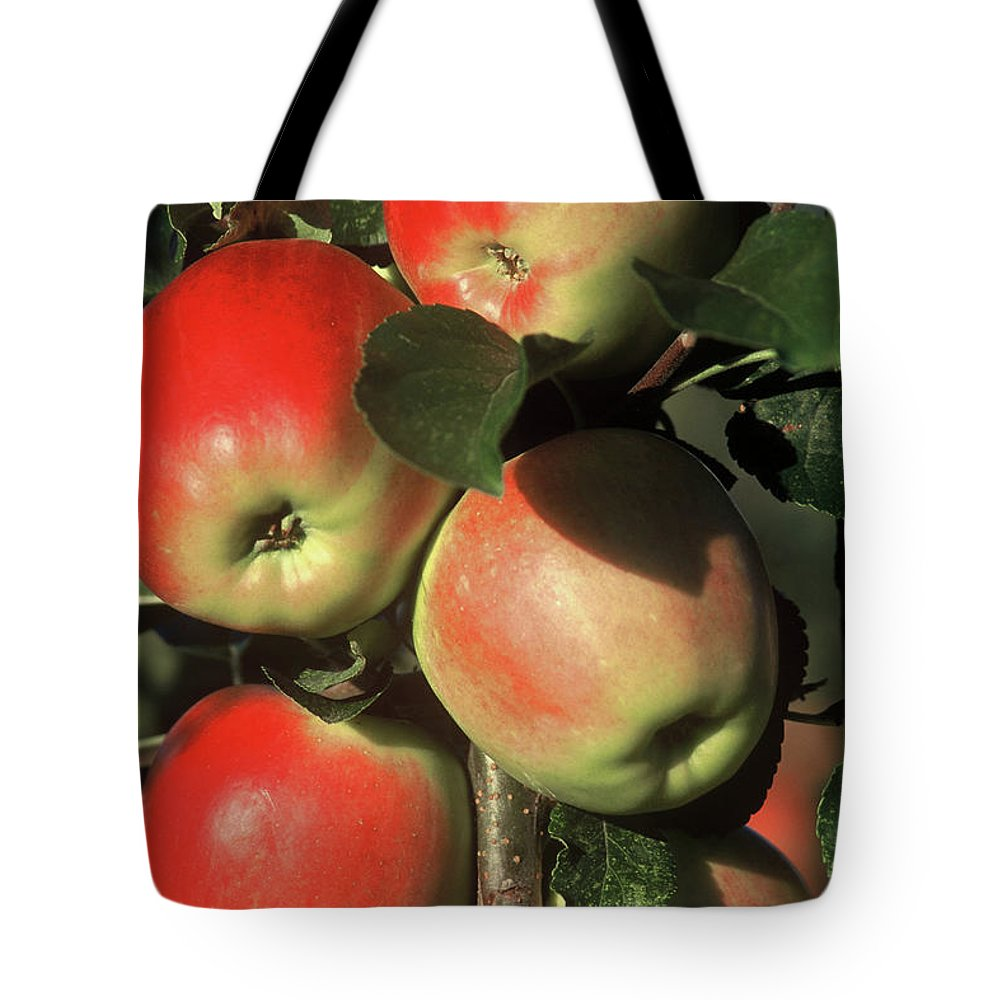 Apples Tote Bag featuring the photograph Ripening Apples by Garry Hampton