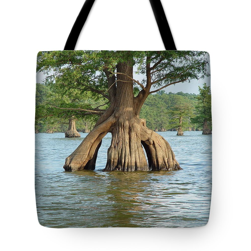 Cypress Tote Bag featuring the photograph Ripley Tennessee Cypress by Lisa Shea