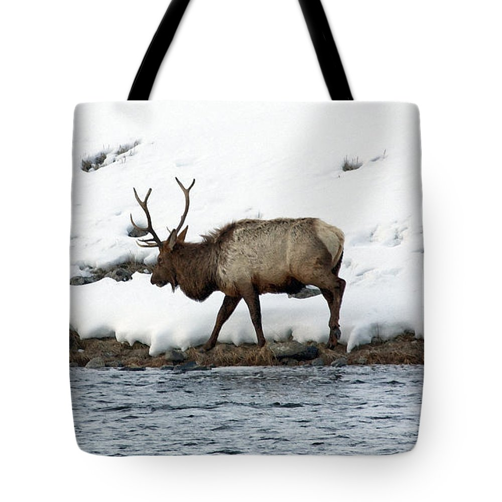 Elk Tote Bag featuring the photograph Riverside Elk by Mary Haber
