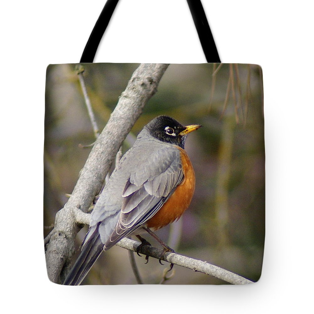 Birds Tote Bag featuring the photograph Robin In Tree 2 by Ben Upham III