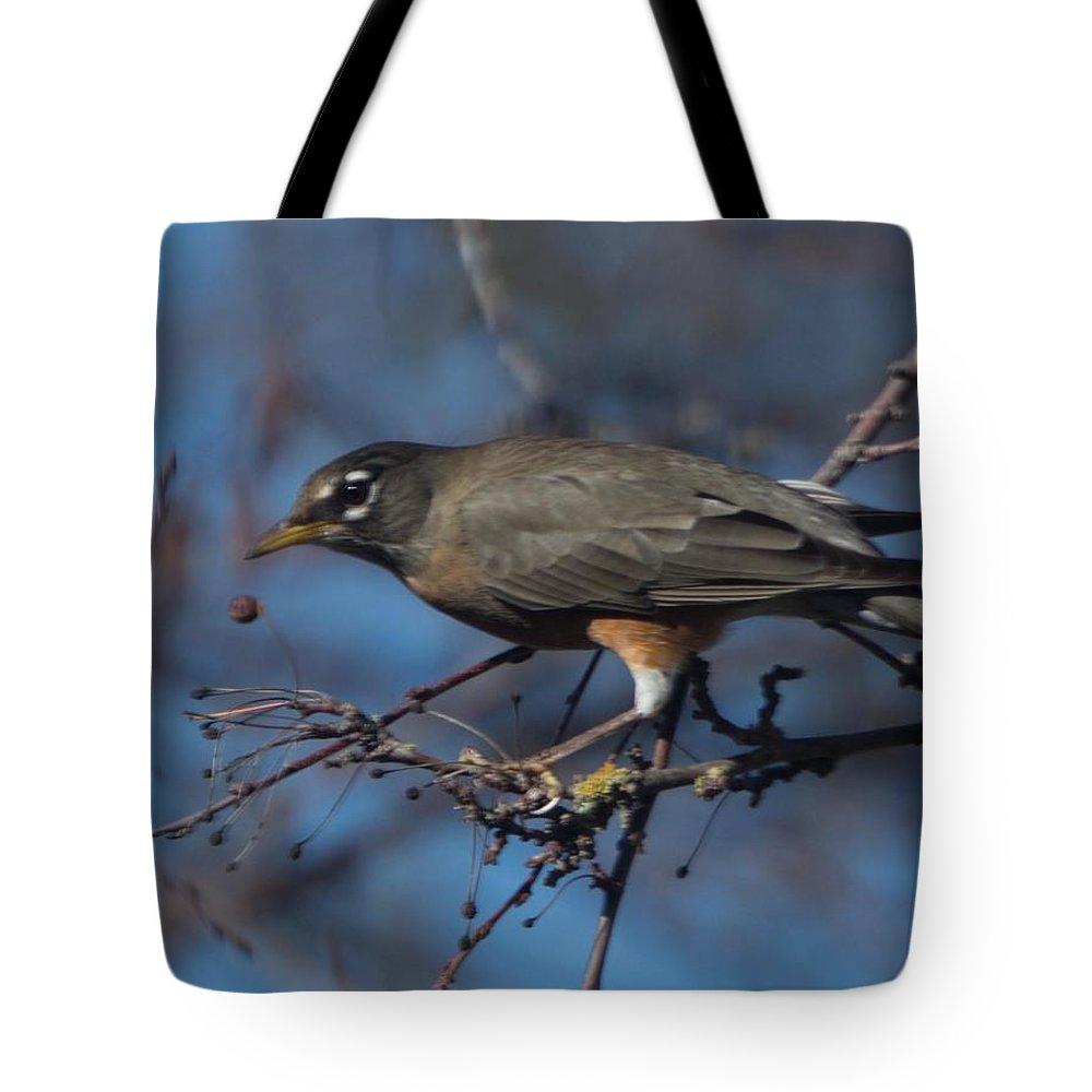 Robin Tote Bag featuring the photograph Robin Bird by Marta Robin Gaughen