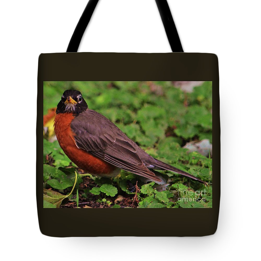 Bird Art Animal Portrait Robin Avian Outdoors Nature Canvas Print Metal Frame Wood Print Poster Print Available On Greeting Cards T Shirts Mugs Pouches Weekender Tote Bags Shower Curtains Tote Bags And Phone Cases Tote Bag featuring the photograph Robin Portrait by Marcus Dagan