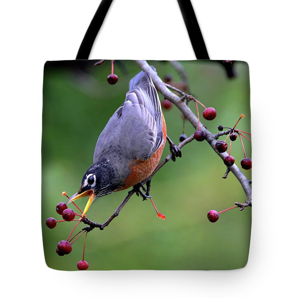 Robin Tote Bag featuring the photograph Robin Reaching For Berry by Brook Burling