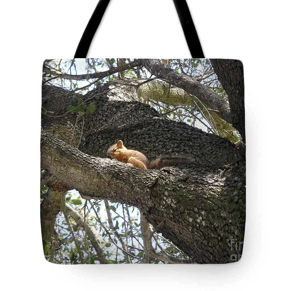Nature Tote Bag featuring the photograph Rock-a-bye Baby... by Lucyna A M Green