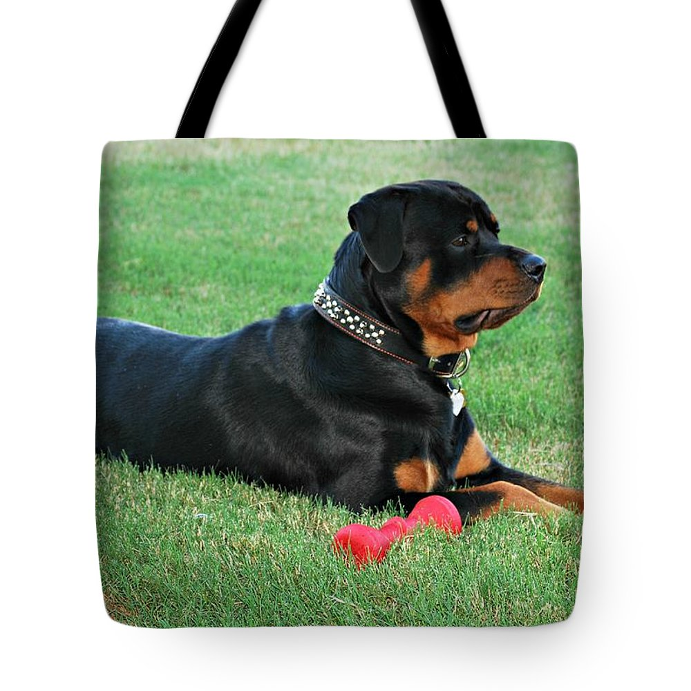 Rottweiler Tote Bag featuring the photograph Rottweiler Portrait by Barbara Woodson
