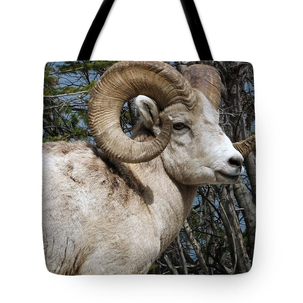 Wildlife Tote Bag featuring the photograph Rocky Mountain Ram by Tiffany Vest