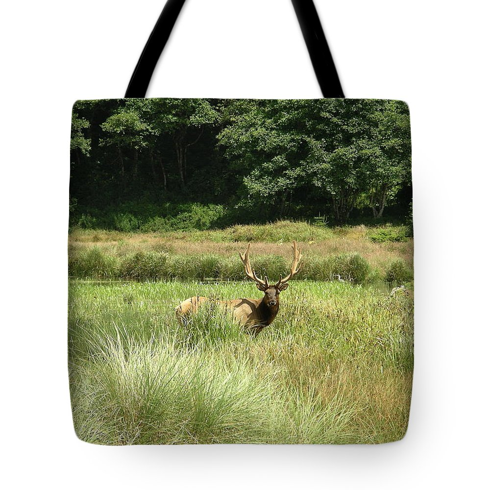 California Tote Bag featuring the photograph Roosevelt Elk 2 by Rich Bodane
