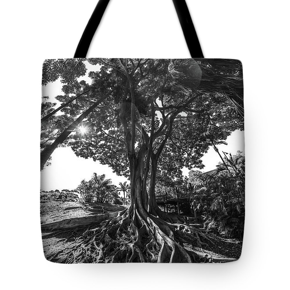 Roots Tote Bag featuring the photograph Roots To Roof by Scott Campbell
