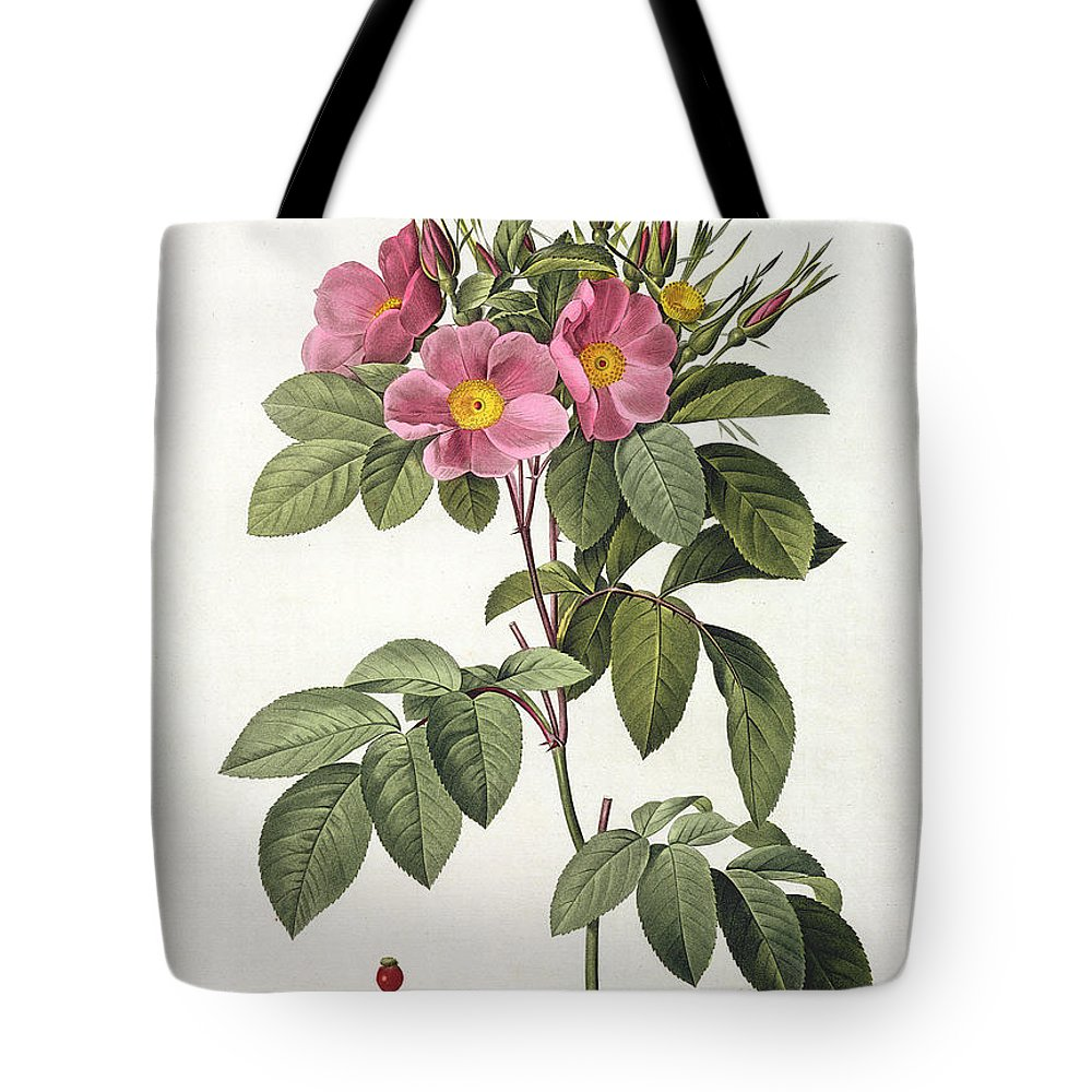 Rosa Tote Bag featuring the drawing Rosa Carolina Corymbosa by Pierre Joseph Redoute