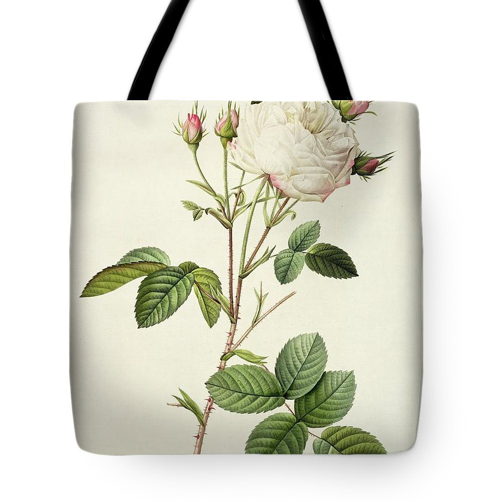 Rosa Tote Bag featuring the drawing Rosa Centifolia Mutabilis by Pierre Joseph Redoute