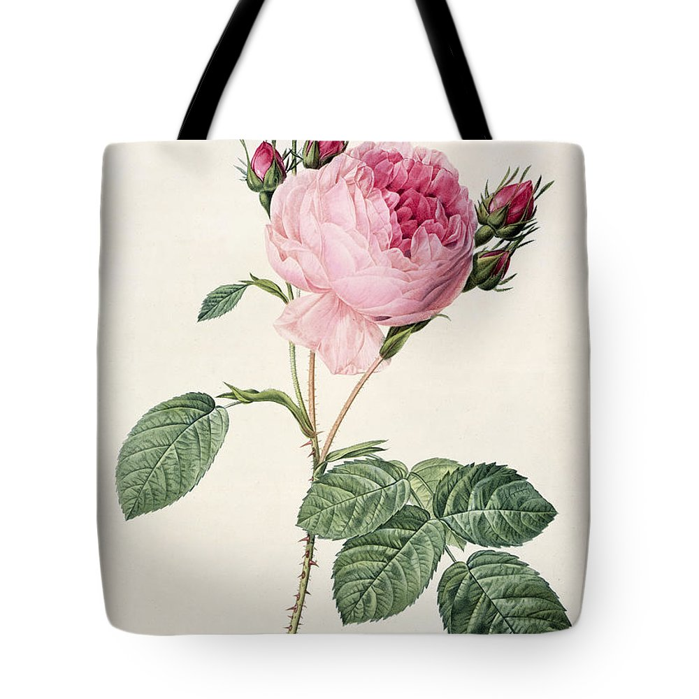 Rosa Tote Bag featuring the drawing Rosa Centifolia by Pierre Joseph Redoute
