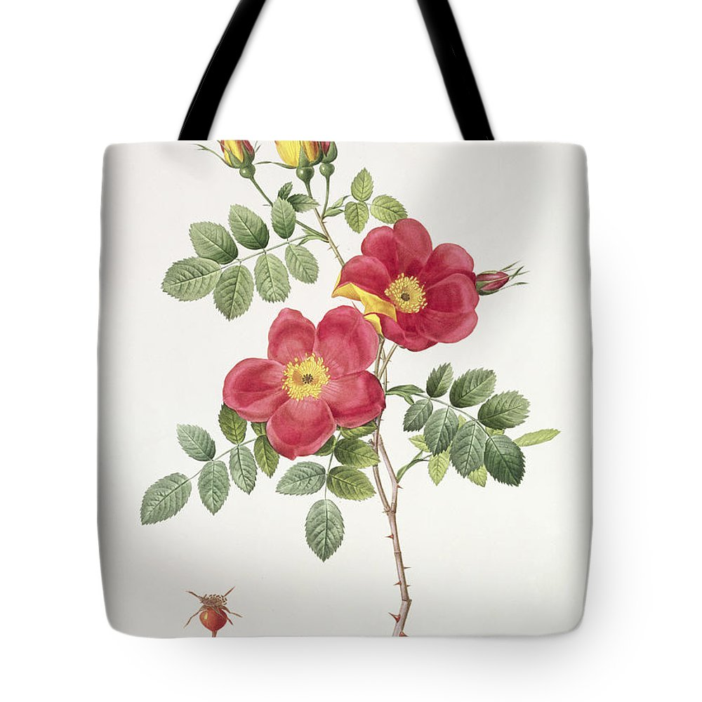 Rosa Tote Bag featuring the drawing Rosa Eglantera Punicea by Pierre Joseph Redoute