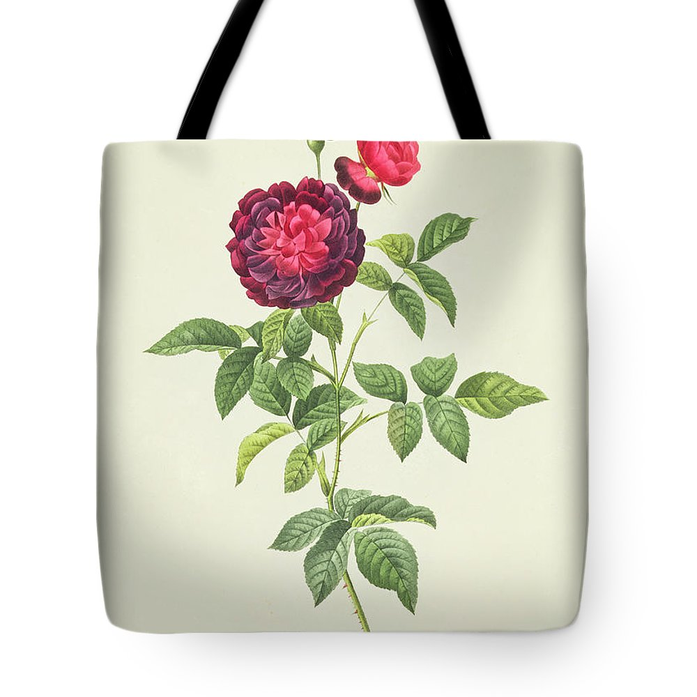 Rosa Tote Bag featuring the drawing Rosa Gallica Gueriniana by Pierre Joseph Redoute