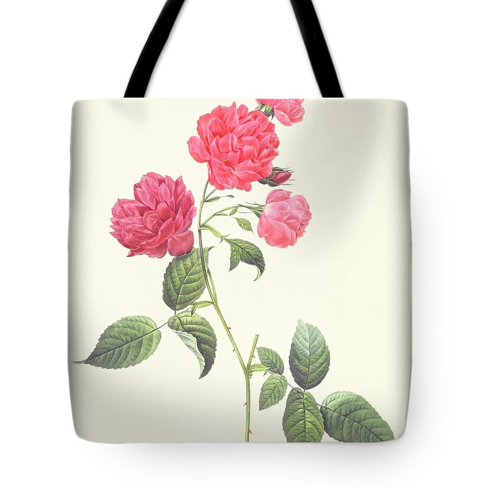 Rosa Tote Bag featuring the drawing Rosa Indica Caryophyllea by Pierre Joseph Redoute