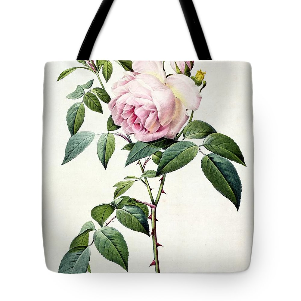 Rosa Tote Bag featuring the drawing Rosa Indica Fragrans by Pierre Joseph Redoute
