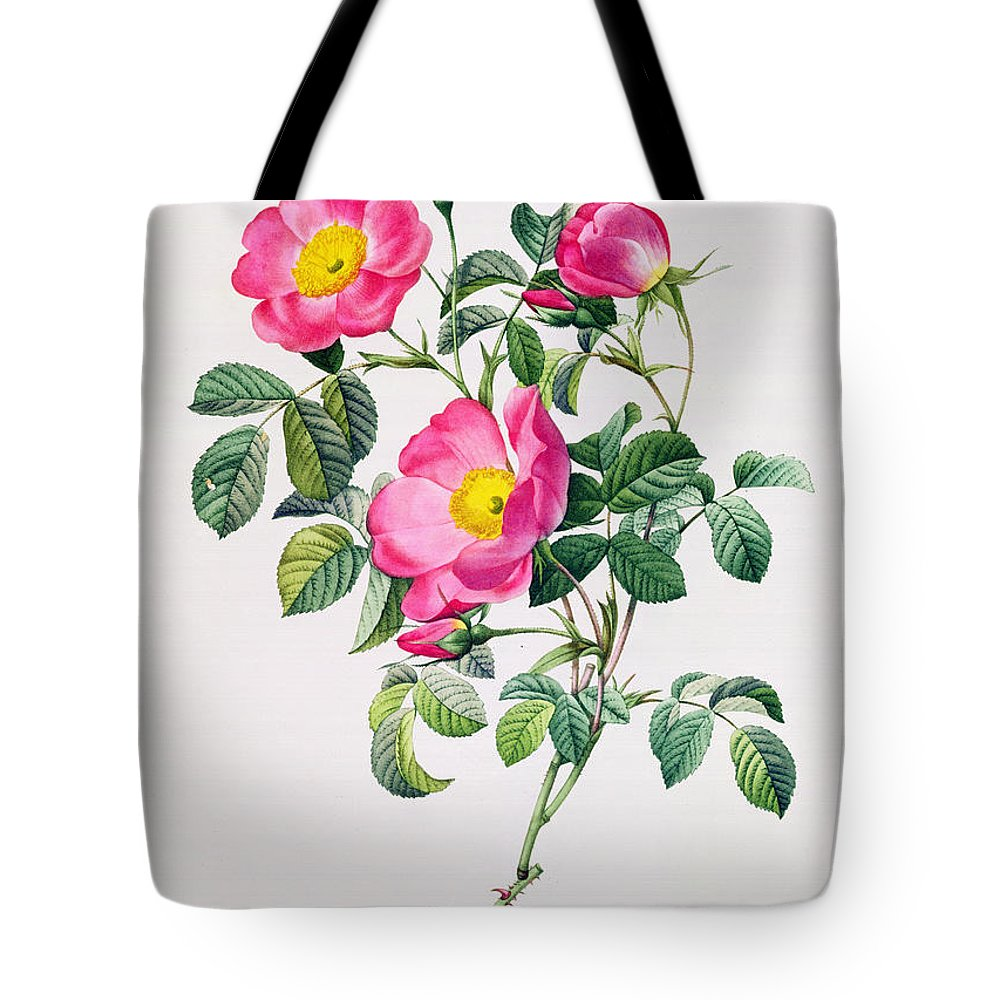 Rosa Tote Bag featuring the drawing Rosa Lumila by Pierre Joseph Redoute