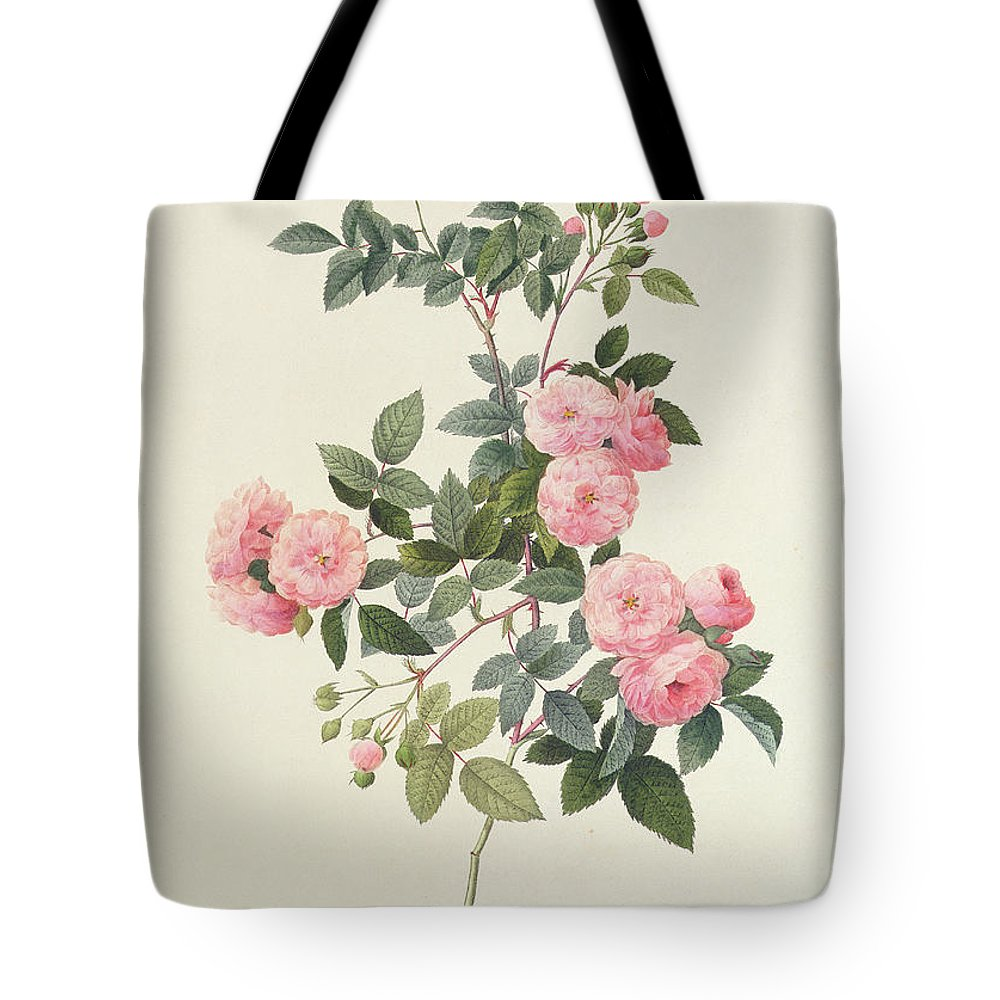 Rosa Tote Bag featuring the drawing Rosa Multiflora Carnea by Pierre Joseph Redoute