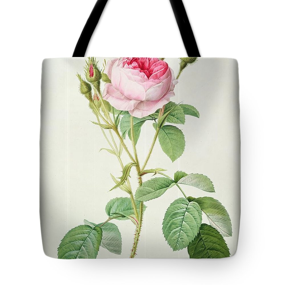 Rosa Tote Bag featuring the drawing Rosa Muscosa Multiplex by Pierre Joseph Redoute