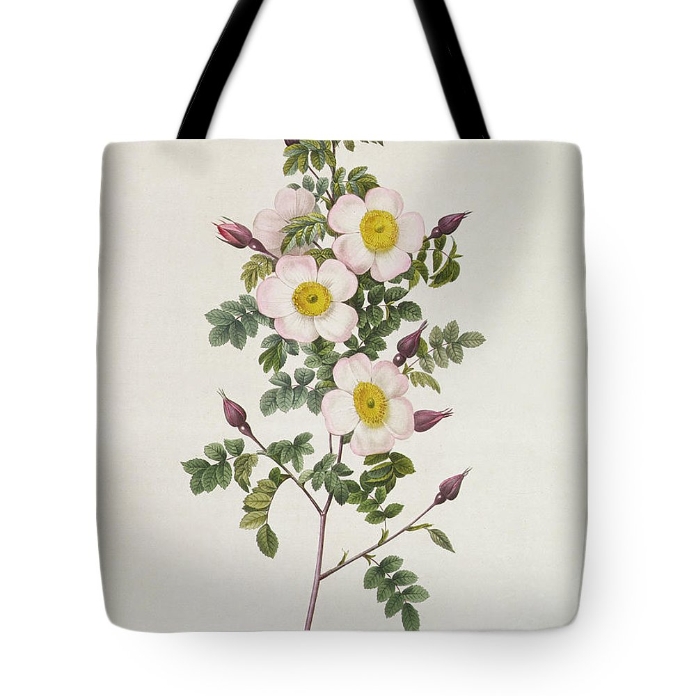 Rosa Tote Bag featuring the drawing Rosa Pimpinelli Folia Inermis by Pierre Joseph Redoute
