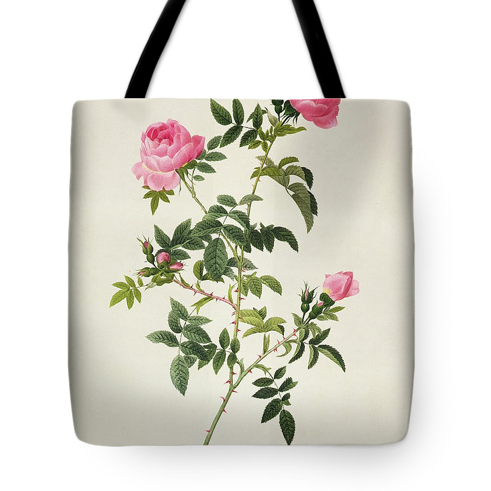 Rosa Tote Bag featuring the drawing Rosa Sepium Flore Submultiplici by Pierre Joseph Redoute