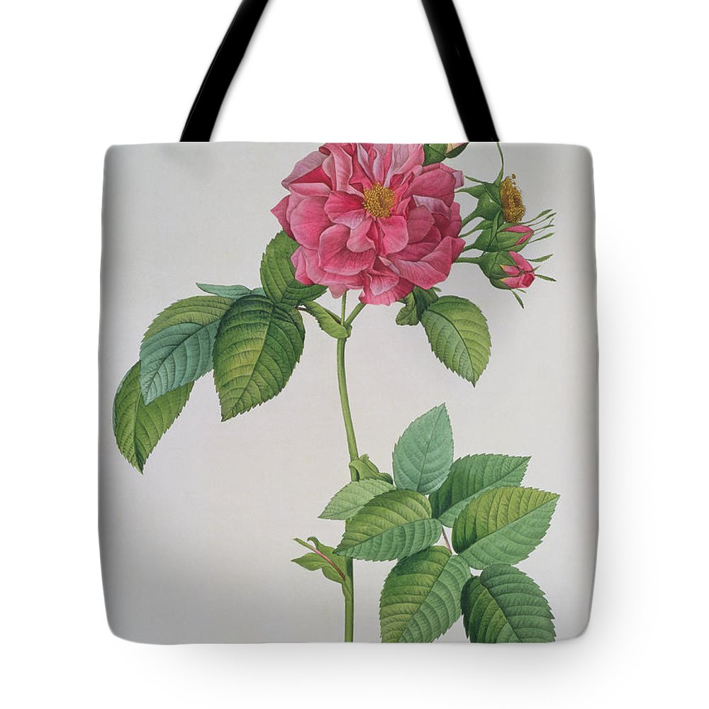 Rosa Tote Bag featuring the drawing Rosa Turbinata by Pierre Joseph Redoute