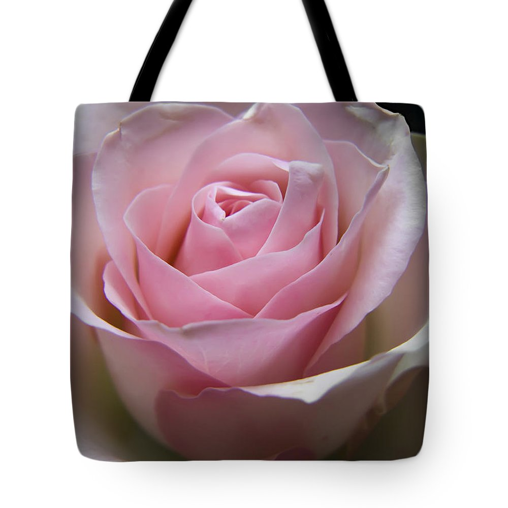Rose Tote Bag featuring the photograph Rose by Daniel Csoka