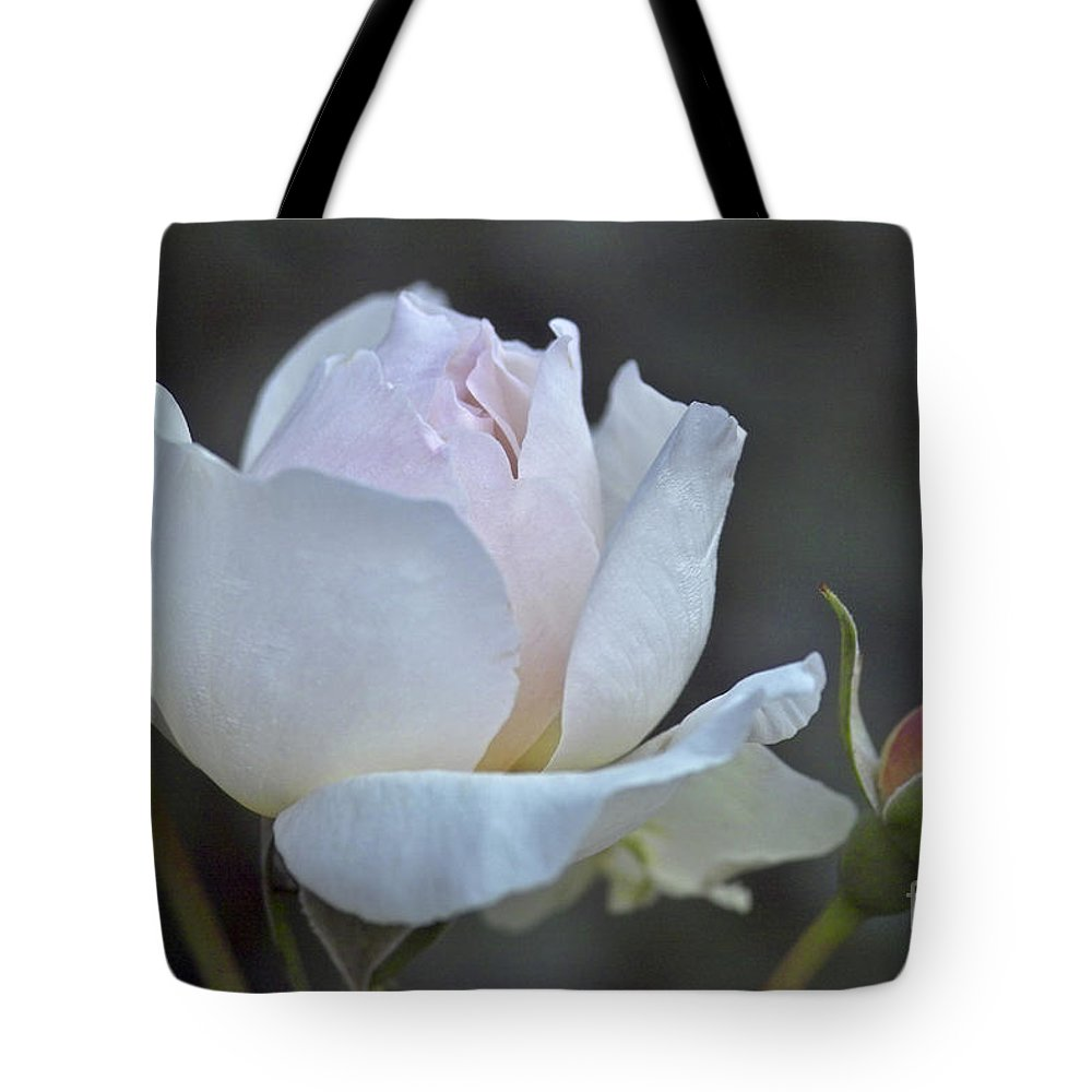 Rose Tote Bag featuring the photograph Rose Flower Series 14 by Heiko Koehrer-Wagner
