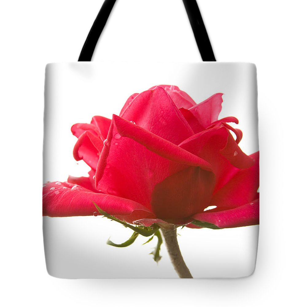 Rose Tote Bag featuring the photograph Rose On White by Idaho Scenic Images Linda Lantzy
