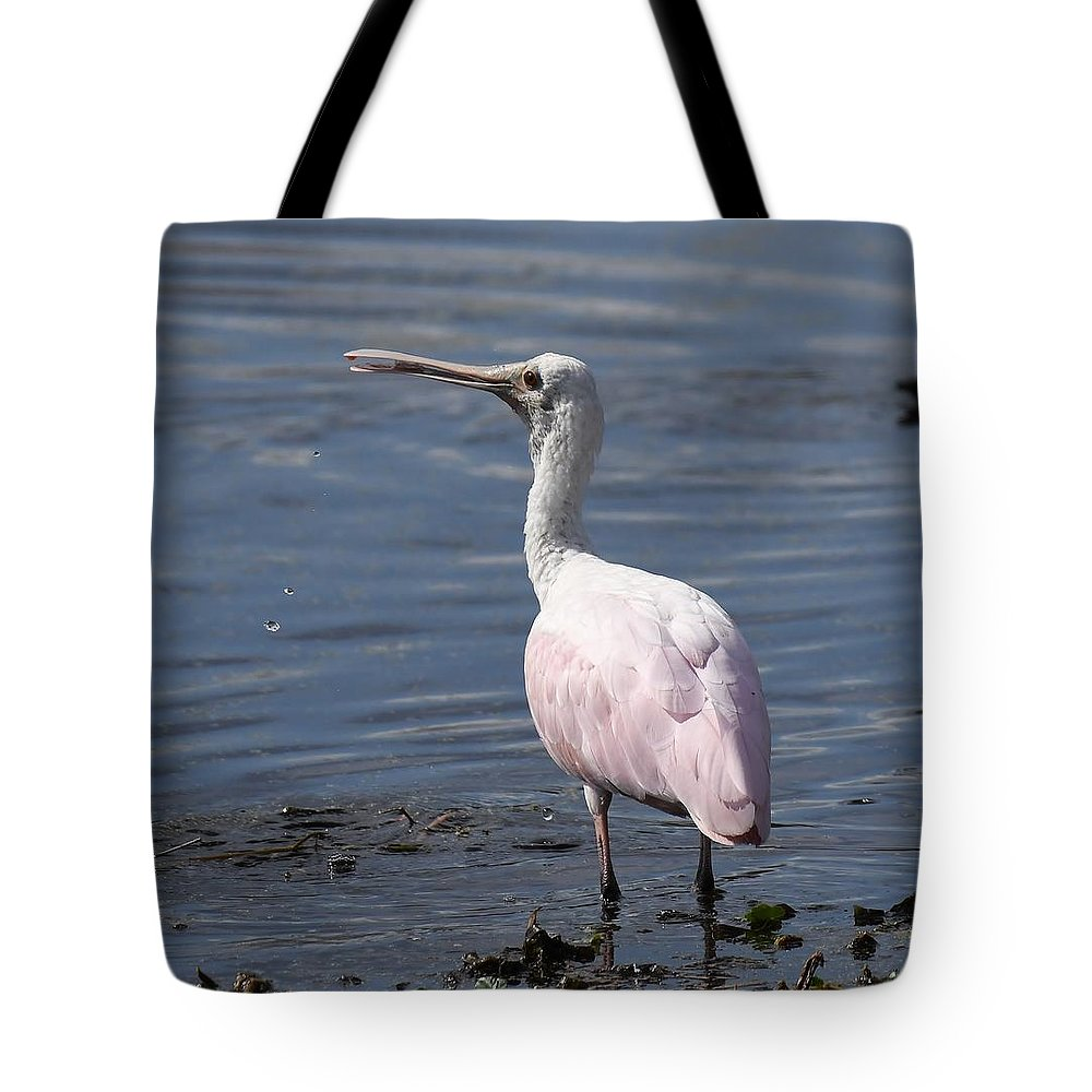 Spoonbill Tote Bag featuring the photograph Roseate Spoonbill by David Campione
