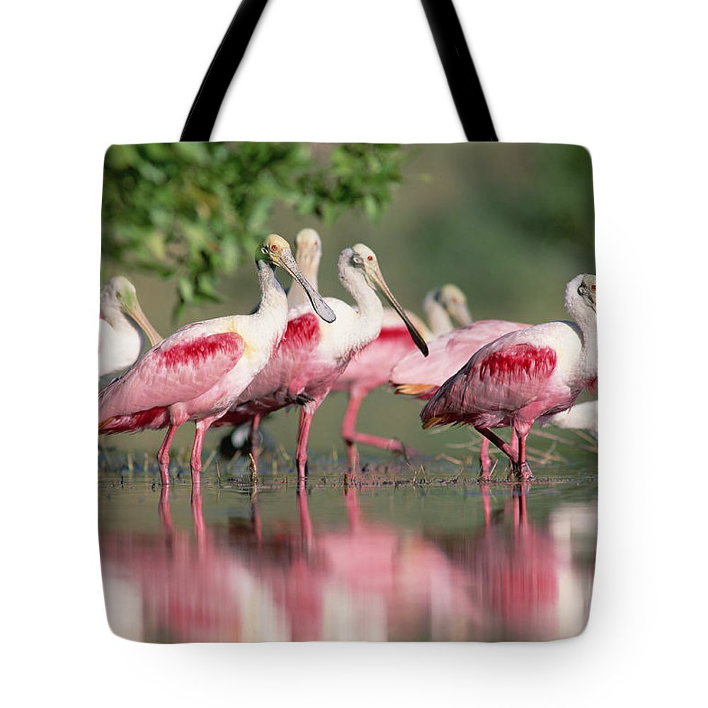 00171421 Tote Bag featuring the photograph Roseate Spoonbill Flock Wading In Pond by Tim Fitzharris