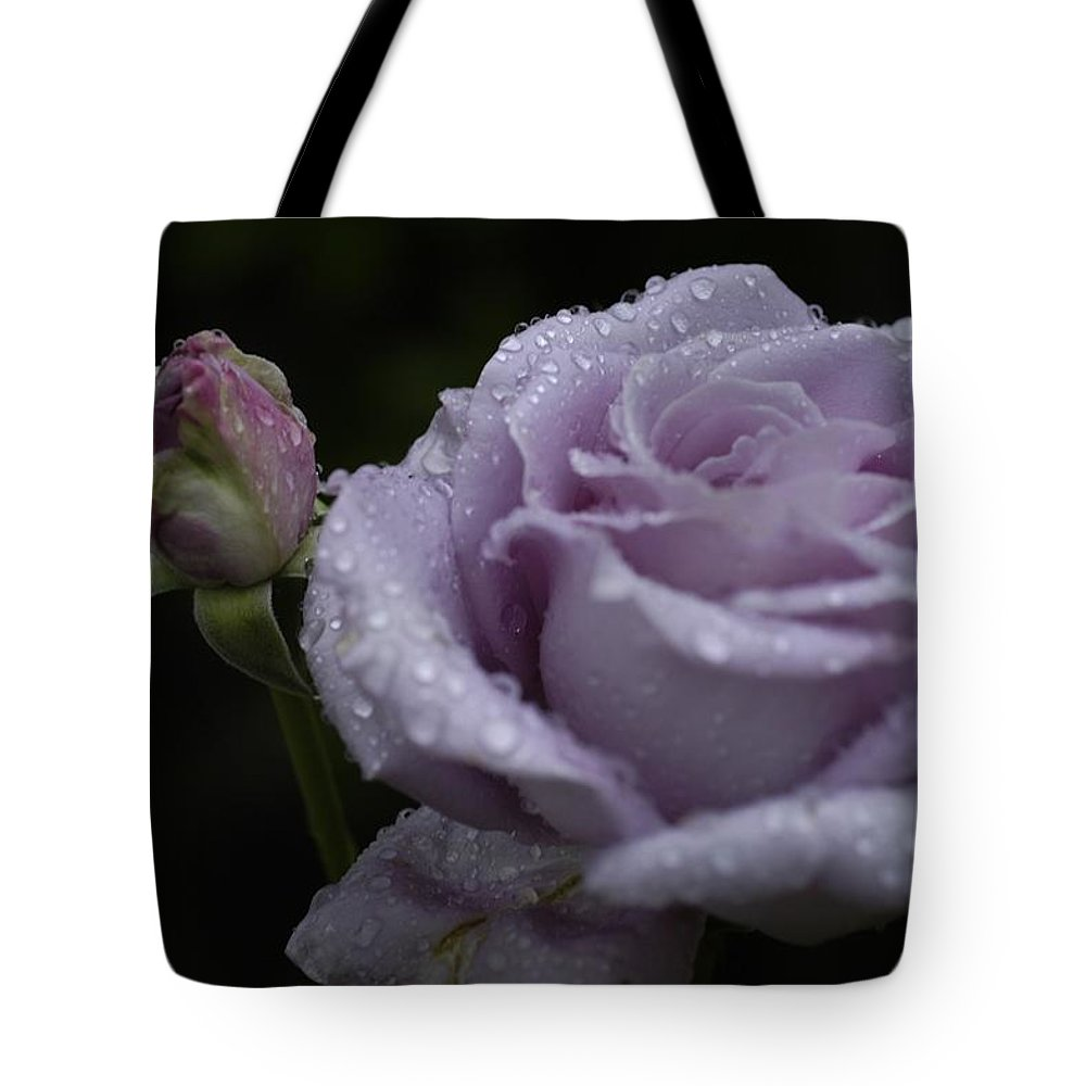 Rosebud Tote Bag featuring the photograph Rosebud by D'Arcy Evans