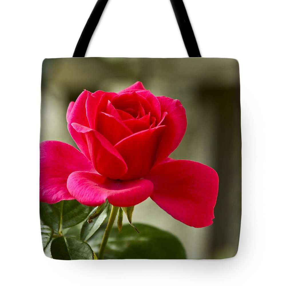 Rose Tote Bag featuring the photograph Red Rose Wall Art Print by Carol F Austin