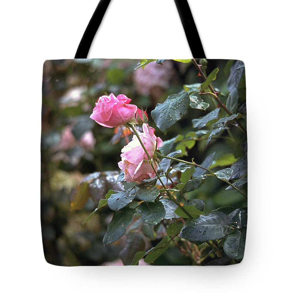 Roses Tote Bag featuring the photograph Roses by Flavia Westerwelle