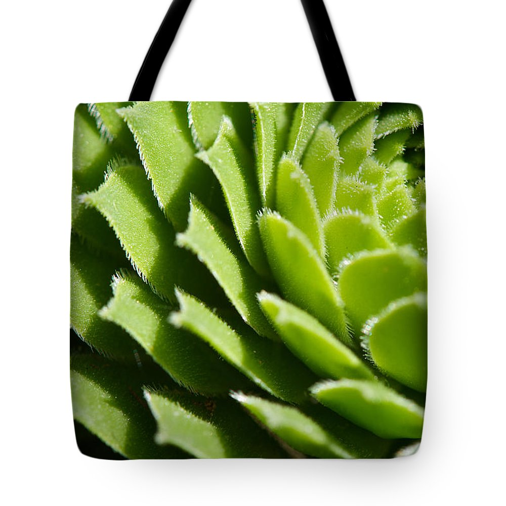 Hen And Chicks Tote Bag featuring the photograph Rosette by Lisa Knechtel