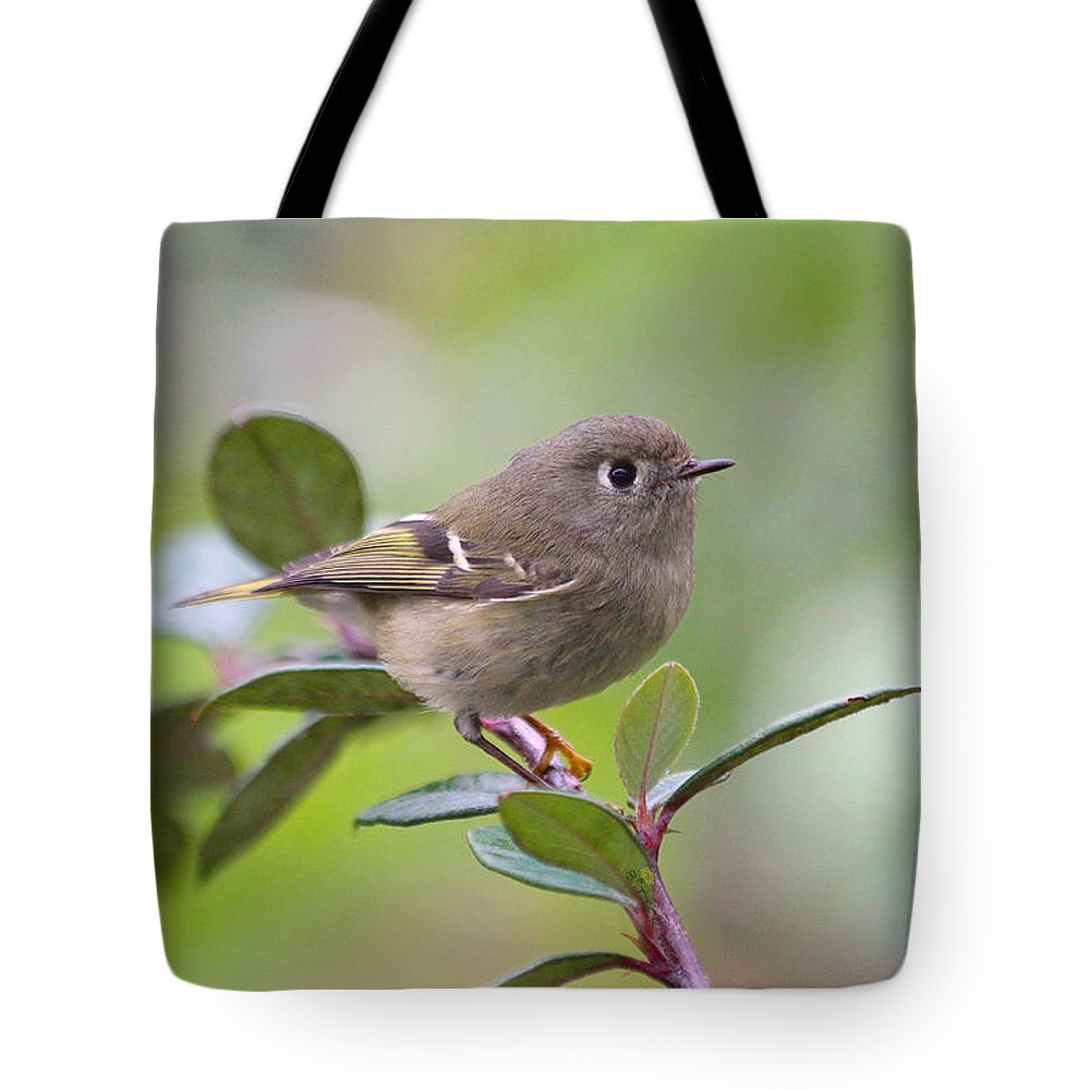 Bird Tote Bag featuring the photograph Ruby Crowned Kinglet by Jan McCamey Hill