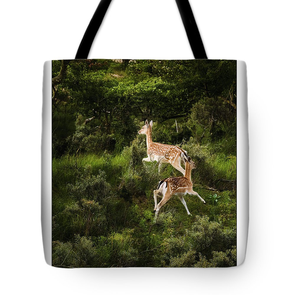 Amsterdamse Waterleiding Duinen Tote Bag featuring the photograph Running Dears by Jan De Graaf