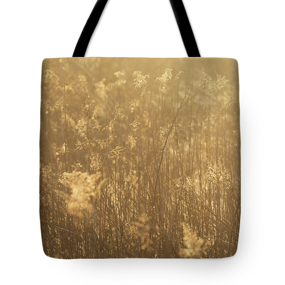 Rural Field At Sunrise Tote Bag featuring the photograph Rural Field At Sunrise by Dan Sproul