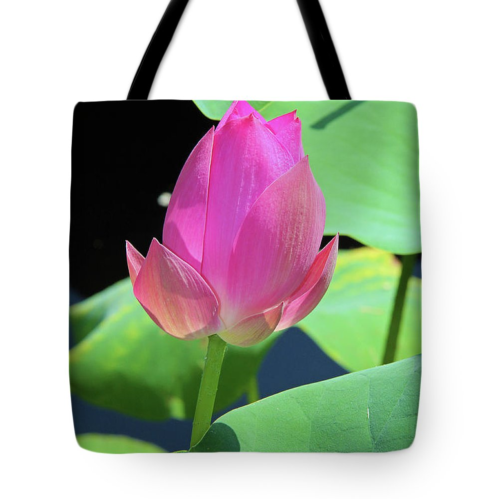 Pond Tote Bag featuring the photograph Sacred Pink by Inspirational Photo Creations Audrey Taylor