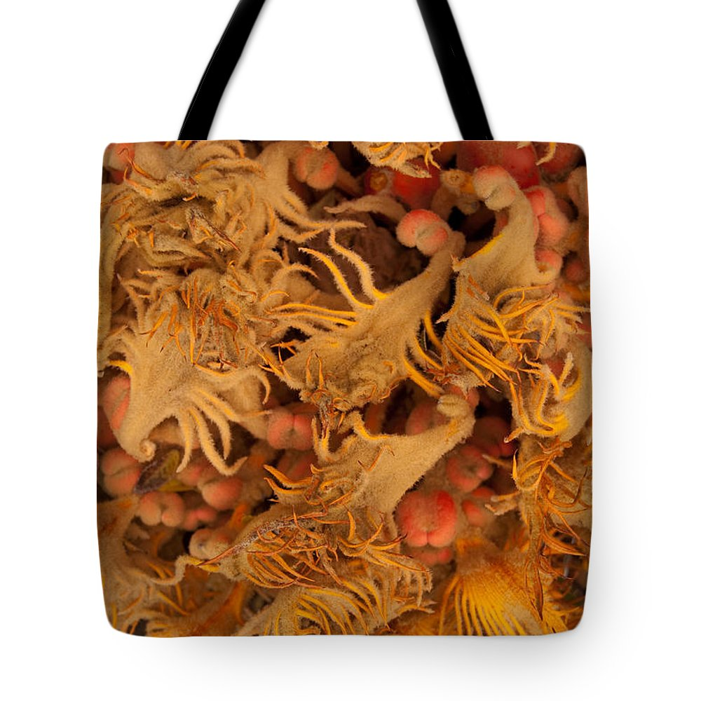 Sago Tote Bag featuring the photograph Sago Seeds by Paulette B Wright