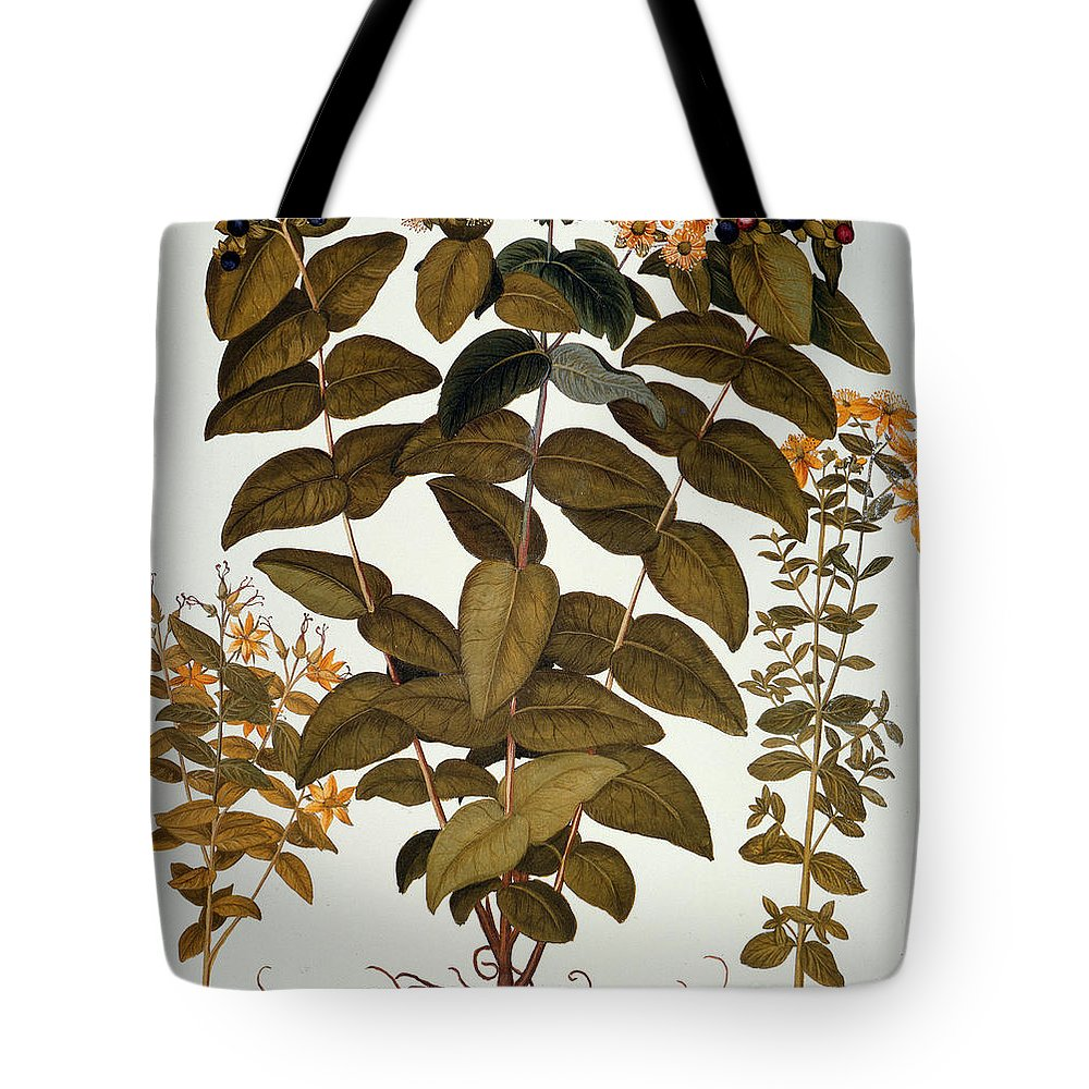 1613 Tote Bag featuring the photograph Saint-johns-wort, 1613 by Granger